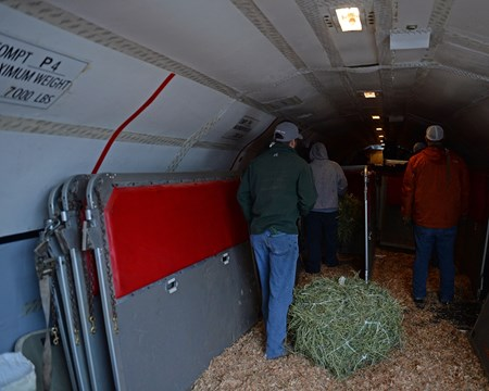 Air transportation: moving horses on to plane and building stalls around them for flight to California on Jan. 23, 2017