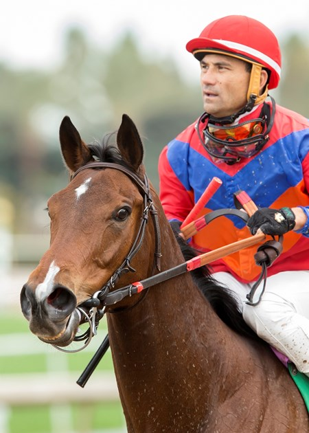 Jockey Corey Nakatani guides Watch This Cat to the winner's circle after their victory in the Grade III, $100,000 Las Cienegas Stakes, Saturday, January 7, 2017 at Santa Anita Park, Arcadia CA.