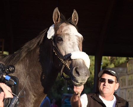 Arrogate - Gulfstream Park, January 24, 2017