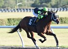 Dynatail wins the OBS Championship Stakes (fillies division) Jan. 24