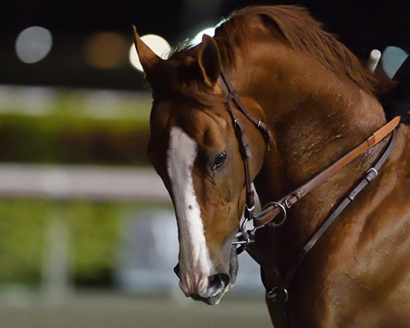 California Chrome - Gulfstream Park - Jan. 8, 2017