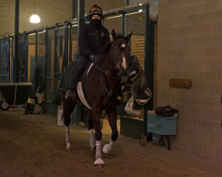 Under tack walk: Travis Warnken on Songbird as she walks the WinStar training barn under tack from 7:30-8 am daily.
