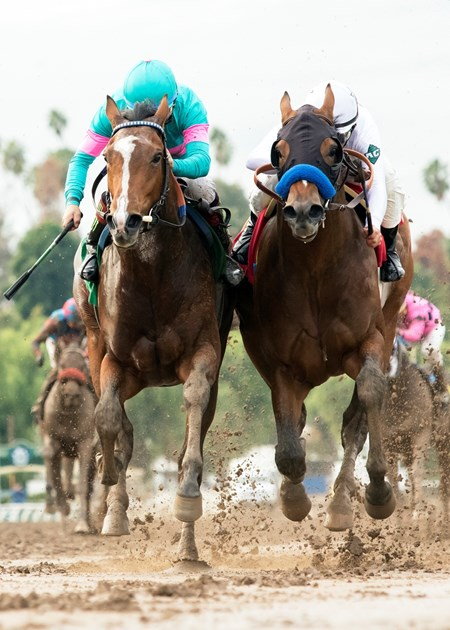 Gormley and jockey Victor Espinoza, left, overpower American Anthem (Mike Smith), right, to win the Grade III, $100,000 Sham Stakes, Saturday, January 7, 2017 at Santa Anita Park, Arcadia CA.
