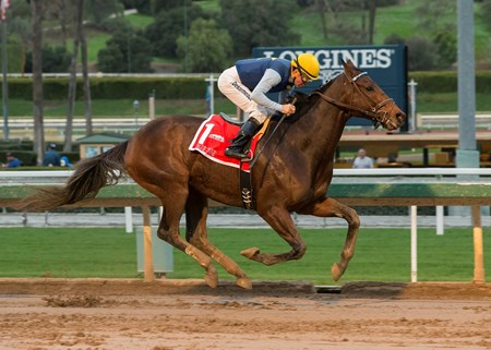 Blue Tone and jockey Kent Desormeaux win the Grade II, $200,000 San Gabriel Stakes, Saturday, January 7, 2017 at Santa Anita Park, Arcadia CA.