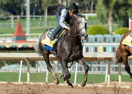 Arrogate - Santa Anita, January 21, 2017