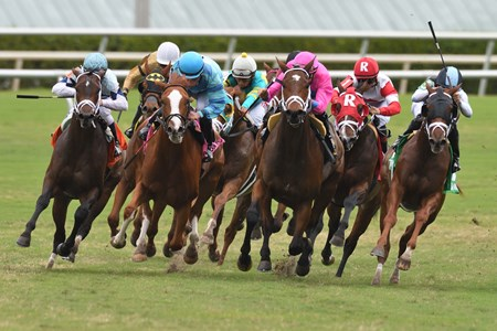 Made You Look wins the 2017 Dania Beach Stakes