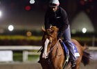 California Chrome jogs at Gulfstream Park under regular exercise rider Dihigi Gladney