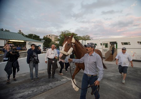California Chrome getting Van @ Gulfstream Park  Jan 6 2017 with Alan Sherman in background
