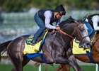 Arrogate Logs Final Pegasus Work