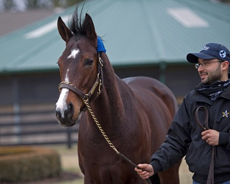 With foreman Salbador Ceballos, Songbird at WinStar Farm near Versailles, Ky.,  on Jan. 10, 2017.