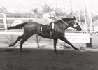 Quack, with Bill Shoemaker up, win the California Derby at Golden Gate on April 22, 1972.