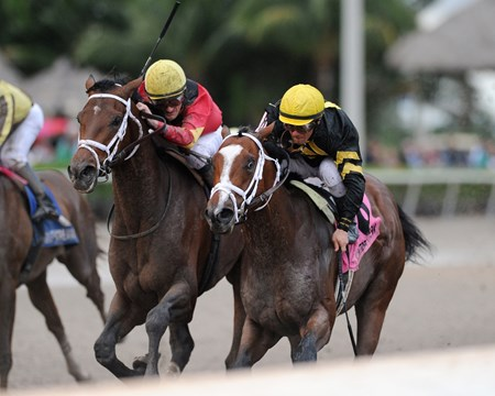 Sonic Mule wins the 2017 Mucho Macho Man