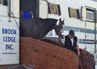 Arrogate Arrives at Gulfstream Park