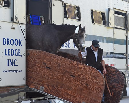 Assistant trainer Jimmy Barnes leads Arrogate off the van at Gulfstream Park as he arrives Jan. 24 for the Jan. 28 Pegasus World Cup (G1)