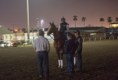 California Chrome and Dihigi Gladney at Gulfstream Park  Jan 11  2017 with Art and Alan Sherman