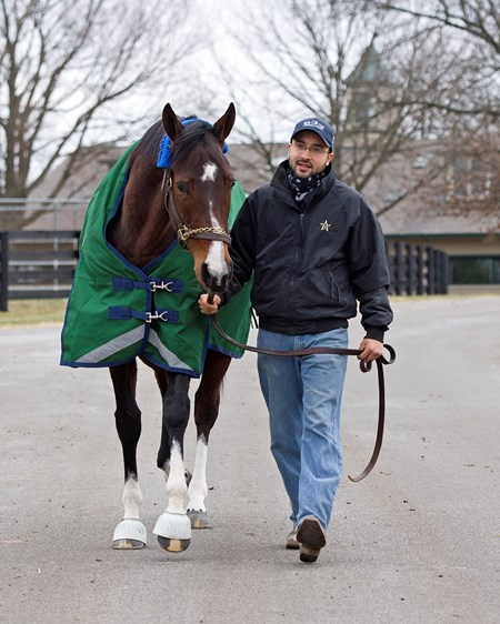 Going to her paddock with foreman Salbador Ceballos, Songbird at WinStar Farm near Versailles, Ky.,  on Jan. 10, 2017.