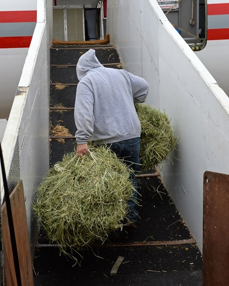 Air Transport: moving hay on to plane for flight to California on Jan. 23, 2017