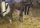A filly out of Set'n On Ready is the first foal born by Darby Dan Farm's Tapiture. She was born Jan. 11 at Wynnstay Farm.