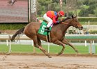 Watch This Cat and jockey Corey Nakatani win the Las Cienegas Stakes