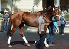 Noble Bird at Gulfstream Park ahead of the Pegasus Invitational World Cup in January