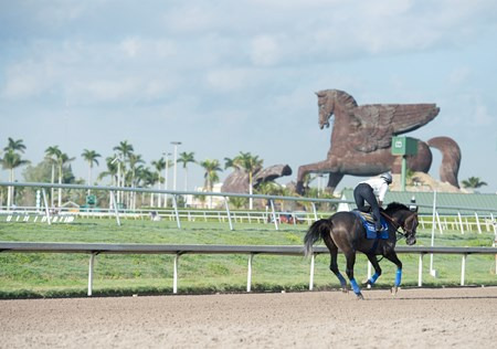 Arrogate Gulfstream Park  Jan 26 2017;