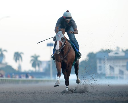 California Chrome - Gulfstream Park, January 21, 2017