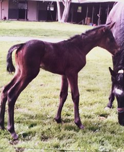 A bay filly out of Nubian Princess is the first reported foal by Circumference. The foal, owned and bred by John Ivory, was born at Milky Way Farm Jan. 16.