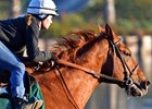 Dortmund Could Return in Triple Bend
