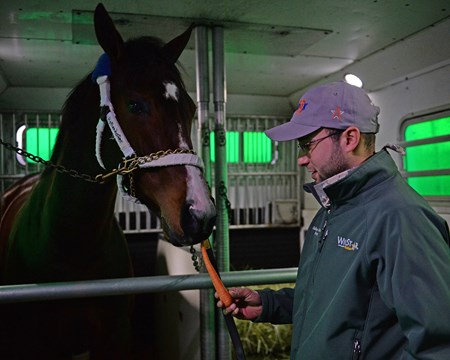 Carrot on the van ride from Salbador Ceballos-Gomez. Songbird prepares to leave WinStar for a van ride to the Lexington airport and flight to California on Jan. 23, 2017, at the WinStar training barn near Versailles, Ky.
