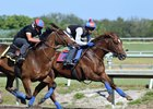 Irish War Cry (rail) works in company at Fair Hill Training Center April 2 for trainer Graham Motion