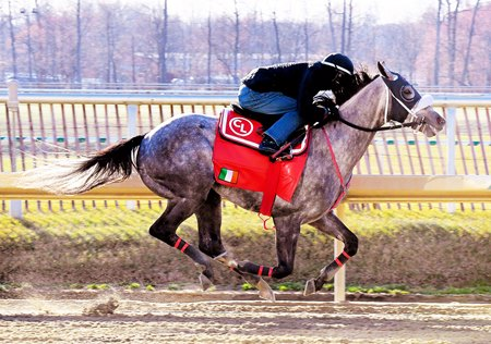 El Areeb works at Laurel Park Feb. 26