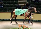 Daughter of Big Brown Tops Goffs Sale