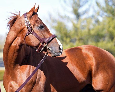 California Chrome Will Not Shuttle to Chile for 2019