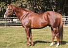 Lucky Pulpit, Sire of 'Chrome', Dies of a Heart Attack