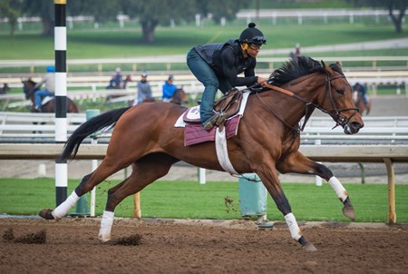 Abel Tasman worked 4 furlongs in :48.40 at Santa Anita on Feb. 2
