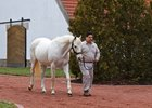 Tapit at Gainesway Farm