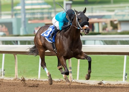 St. Joe Bay comes home strong in the Palos Verdes