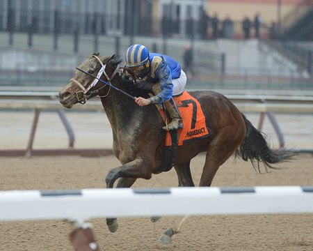 Takrees wins the Jan. 22 Interborough Stakes