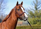 California Chrome Will Shuttle to Chile