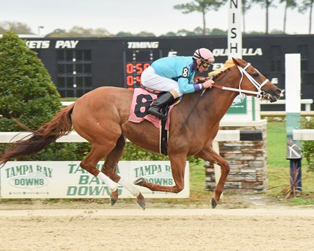 Ronnie Allen Jr. guides Spanish Concert to victory in this year's Minaret Stakes at Tampa Bay Downs