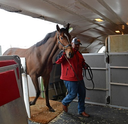 Horse coming on to flight to California on Jan. 23, 2017
