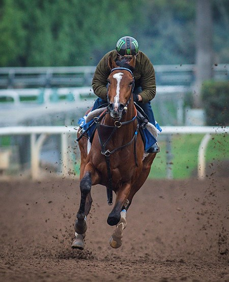 Gormley - Santa Anita, February 10, 2017