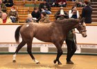 Easton Angel was purchased for 500,000 guineas.