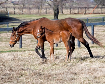 Lucky To Be Me with her Strong Mandate filly born on Jan. 17, 2017, at Respite Farm near Paris, Ky. Lucky To Be Me is the dam of 2016 champion 2yo filly Champagne Room.