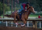 Stellar Wind Logs First Breeze of 2017 at Santa Anita