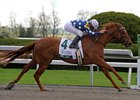 Vinery Madison Stakes winner Dr. Zic is entered in the upcoming Fasig-Tipton auction.