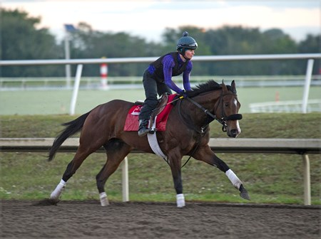 Classic Empire at Palm Meadows, Feb 1, 2017