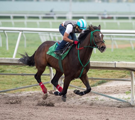 Three Rules works with Luis Seaz up at Gulfstream Park  Feb 24 2017