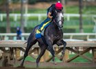 Champion Arrogate Returns to the Worktab