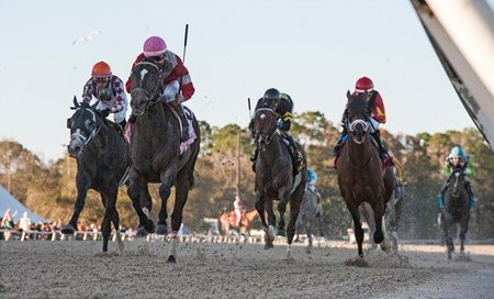 McCraken with Brian j Hernahdez win The Sam F Davis Stakes @ Tampa Bay Down  Feb 11 2017